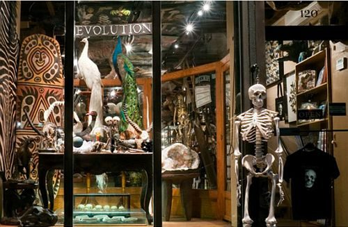 7. Activité amusante à faire en famille à New-York: magasinez chez Evolution