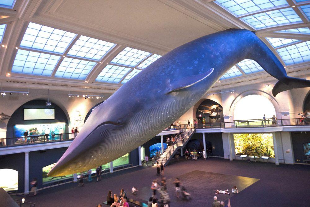 9. Visitez le Musée américain d'Histoire naturelle est une activité familiale amusante à faire à New-York