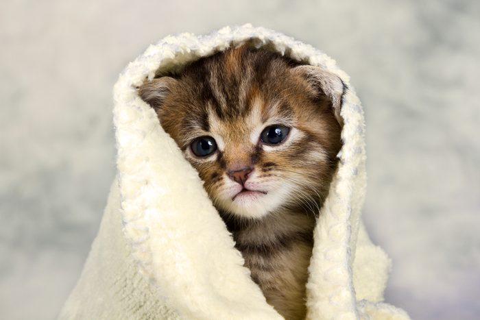 2. Les chats coûtent cher