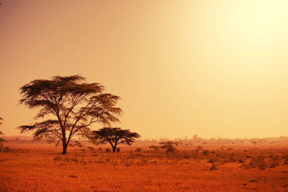 L'Afrique du Sud: Un voyage de rêve pour sa faune et sa flore