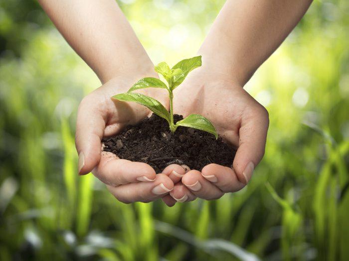 Agriculture urbaine: les fruits de notre labeur