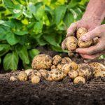 18 trucs faciles pour rendre vos aliments plus santé