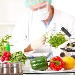 Débats et inquiétudes à l'égard des organismes génétiquement modifiés (OGM)
