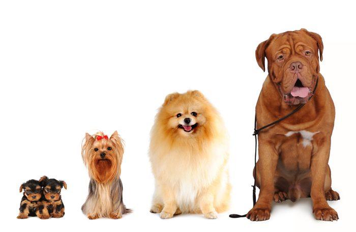 Les plus petits animaux polluent moins que les gros...