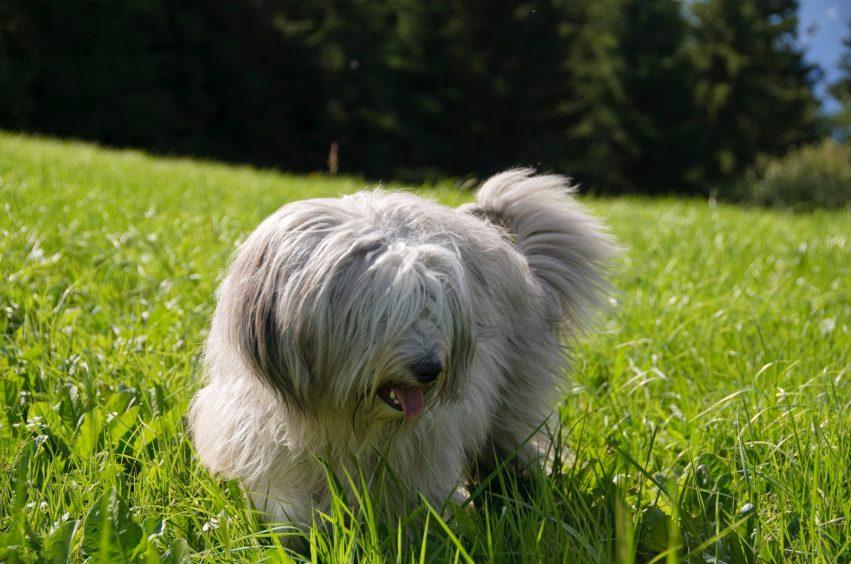 J'ai le droit d'aimer l'herbe... du moins celle qui est bonne pour ma santé!