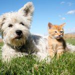 Environnement: Nos chats et nos chiens trop polluants?