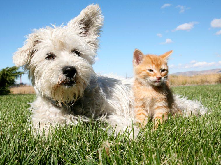 Une alimentation plus verte pour votre chien et votre chat