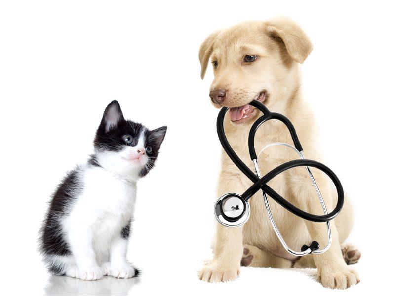 J'aimerais bien pouvoir consulter un vétérinaire...