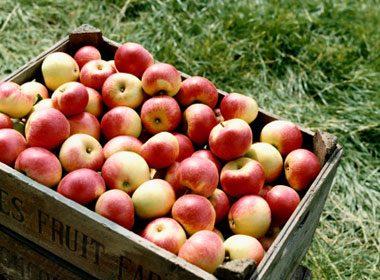 Les pommes sont faibles en calories