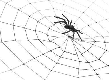 Avoir une araignée au plafond
