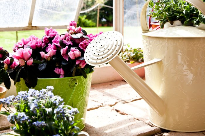 Le sel d'epsom est utile pour faire grandir les plantes plus vite.