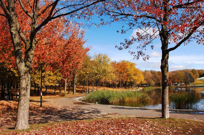 3. La meilleure attraction touristique à Montréal: Le parc du Mont-Royal