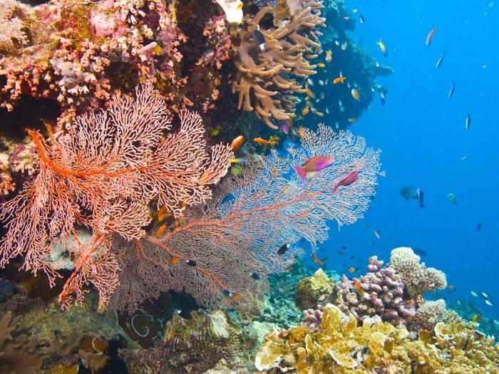 Île Hamilton, Australie