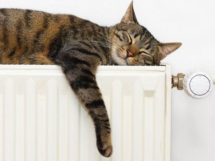 3. Les chats prennent de votre temps