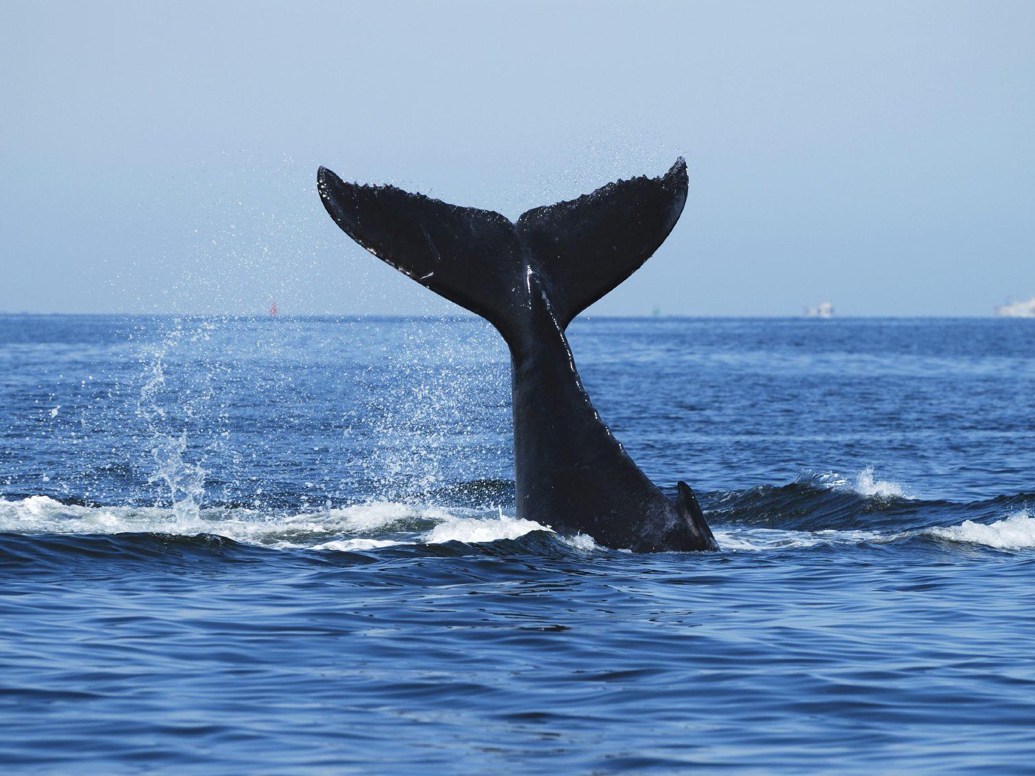 2. Observation de baleines