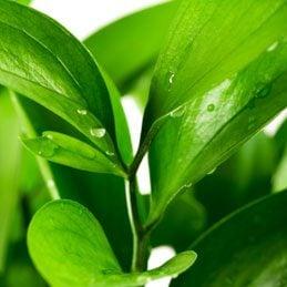 4. Feuilles de plantes brillantes