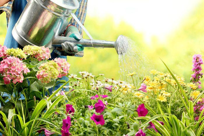 L'ail est utile pour protéger les plantes