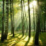 13 bonnes raisons de renouer avec la nature