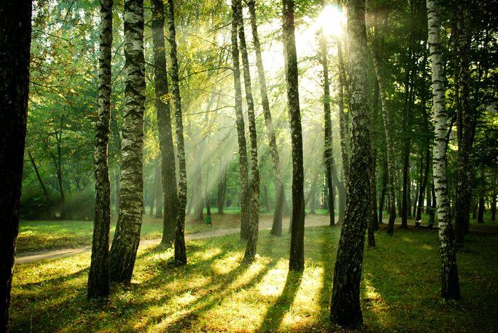 13 bonnes raisons de renouer avec la nature.
