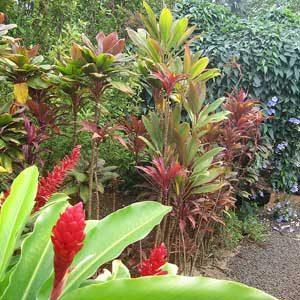 4. Jardins McBryde, National Tropical Botanical Garden