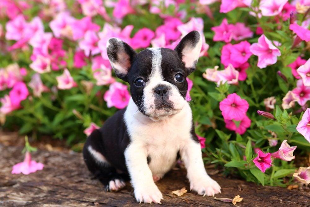 Races de chiens: Les meilleurs chiens pour vous et votre