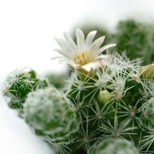 4. Pour les Cactus
