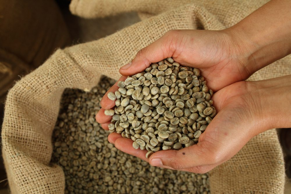 Green coffee contributes to weight loss