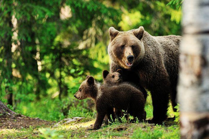 En cas de rencontre avec un ours ?