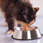 6 mythes étranges sur la nutrition des animaux