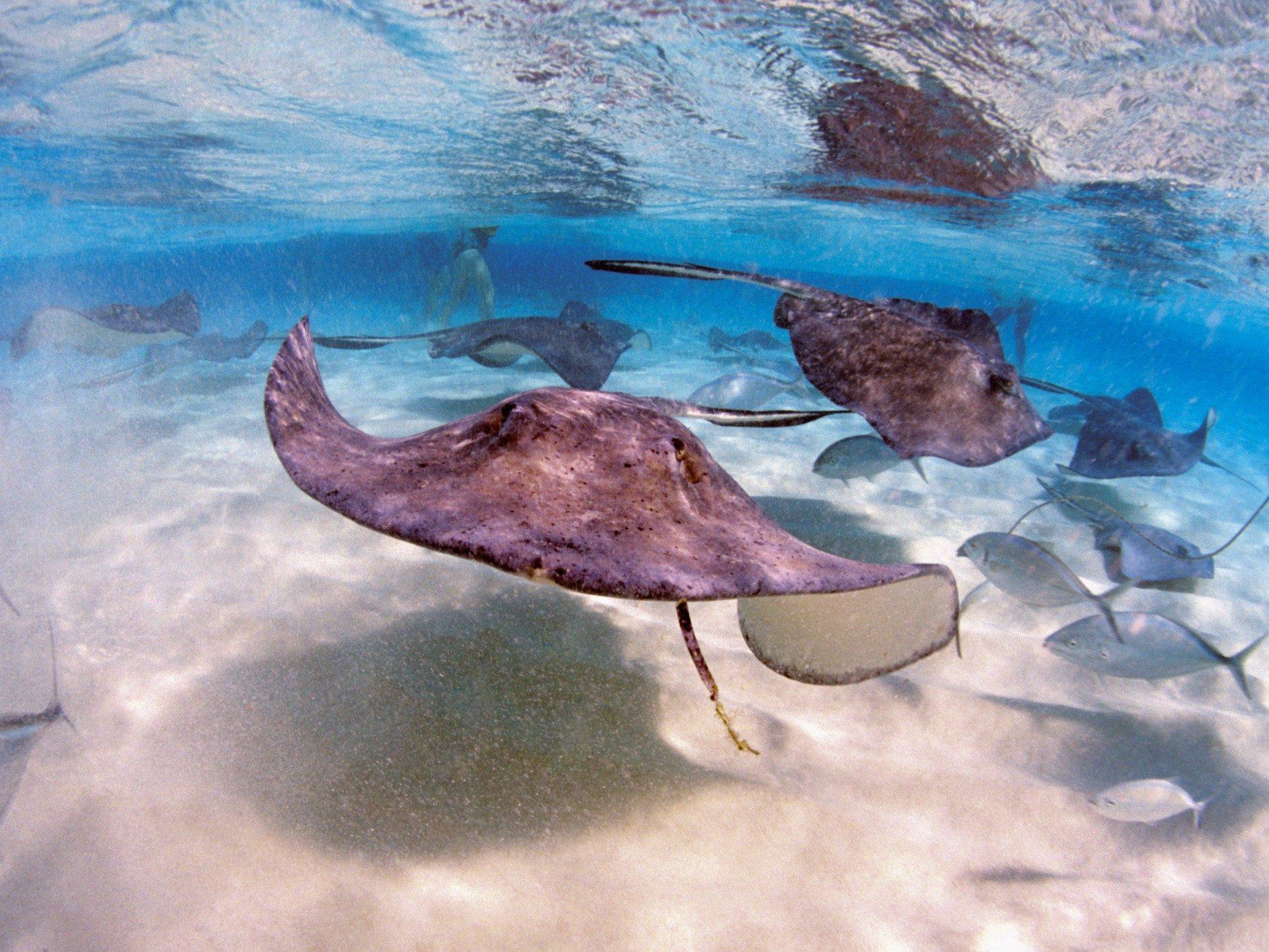 Îles Caïmans