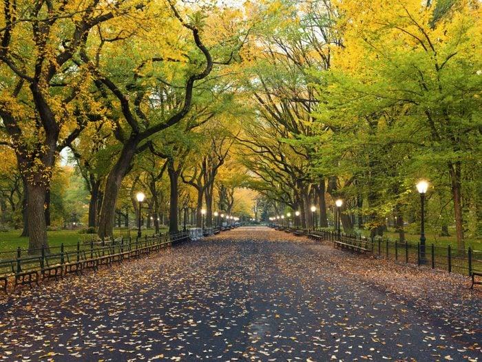 7. Central Park: un site incontournable de New York City
