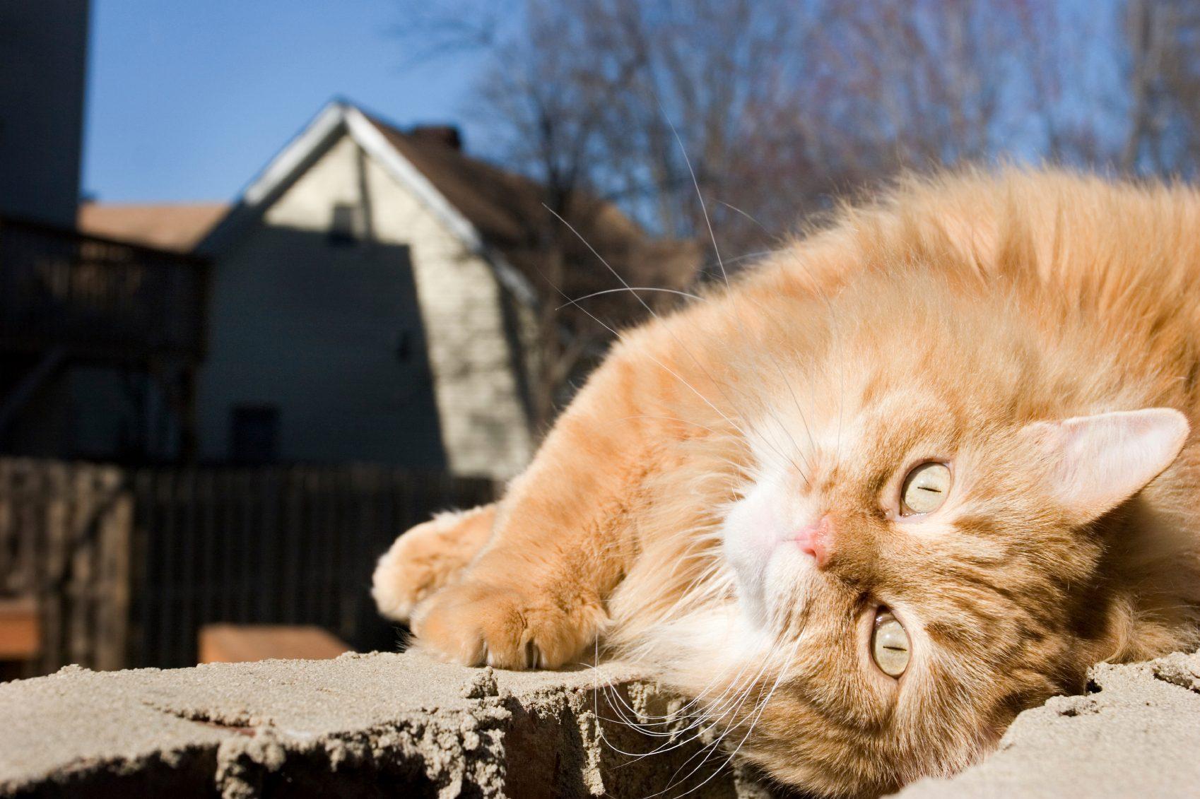 Les chats adorent le soleil.