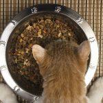 Les besoins particuliers des chats âgés