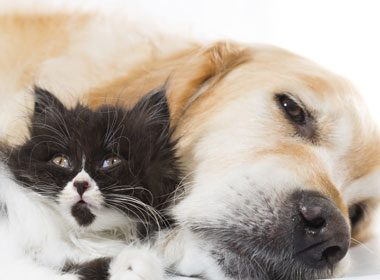 Chien ou chat: quel animal est le plus intelligent
