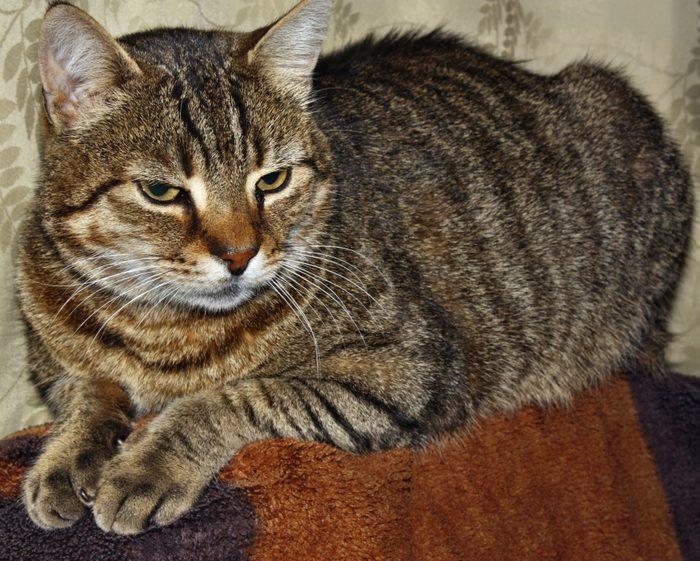 Troubles cognifits de votre chat : soyez vigilant!