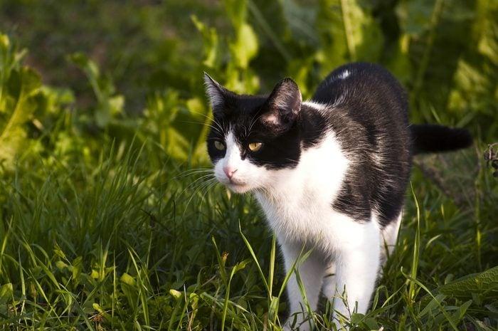 5. Comment est la personnalité des chats noirs et blancs?