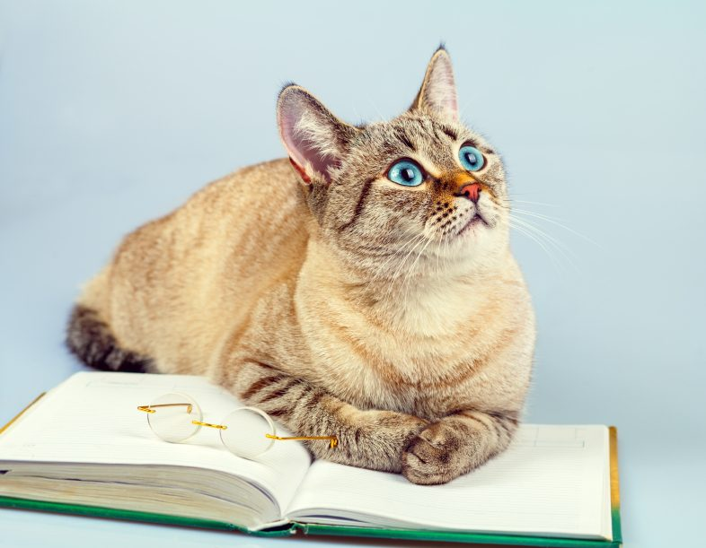Les amoureux des chats sont plus susceptibles d'avoir complété un diplôme d'études supérieures.