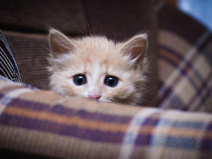 6. Les chats doivent être en sécurité