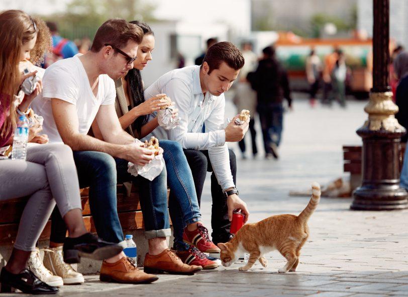 Les amoureux des chats sont plus susceptibles de sauver les chatons errants