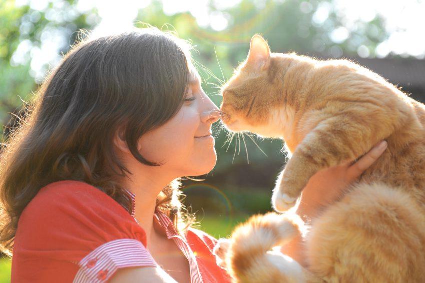 Les amoureux des chats préfèrent l'ironie
