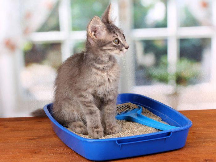 8. Les chats ont besoin d'un bon bac à litière