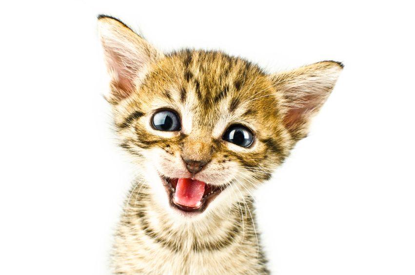 11. Votre chat miaule sans arrêt car il vous dit «Bonjour!»