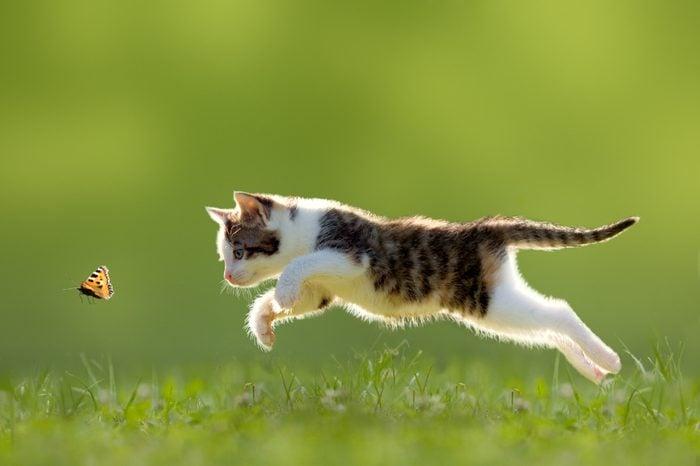 6. Votre chat miaule car il veut s'accoupler