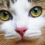 Votre chat miaule toujours et sans arrêt? Voici les 15 raisons étonnantes