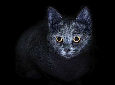 Croiser un chat noir