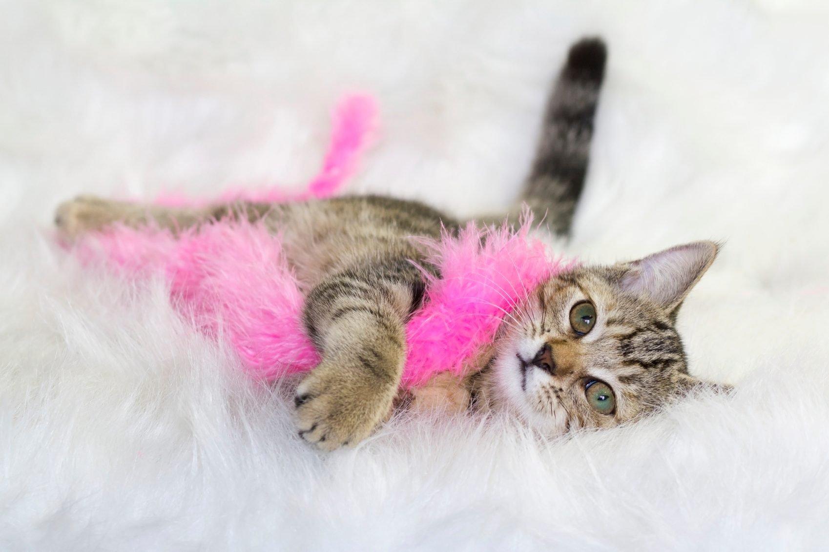 Les chats apprennent vite à ronronner.