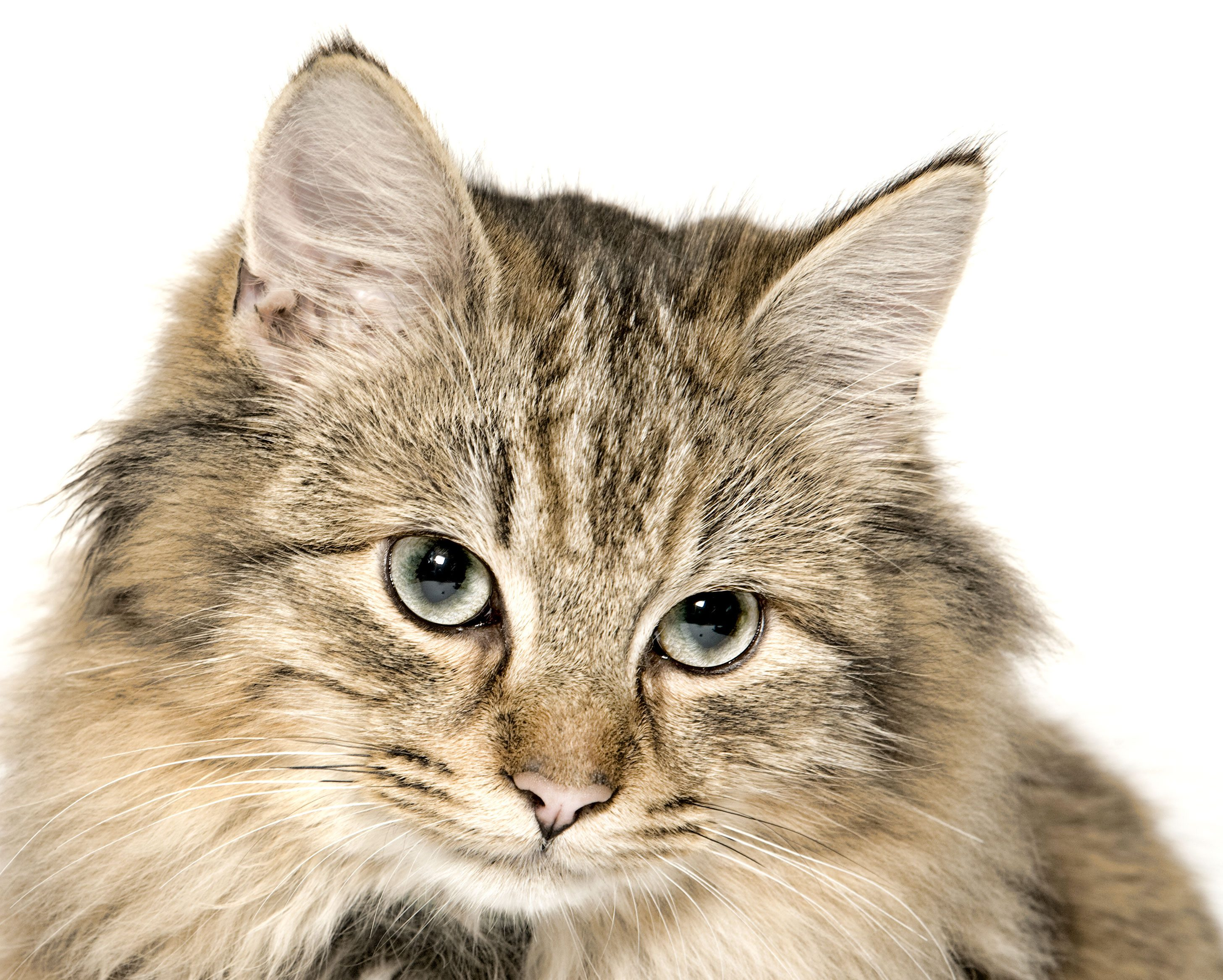 Voyez à la vision de votre chat