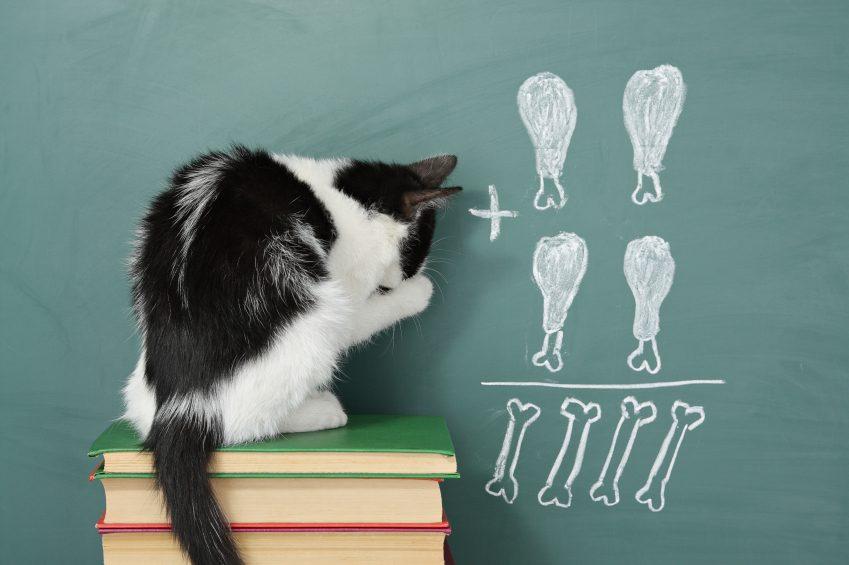 Je peux apprendre, parfois même mieux qu'un chien!