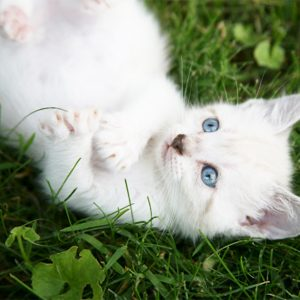 Votre chat a-t-il besoin d'une pédicure?