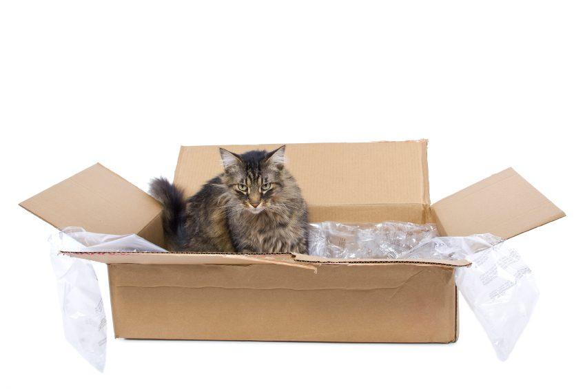 Oubliez les jouets pour chats trop compliqués